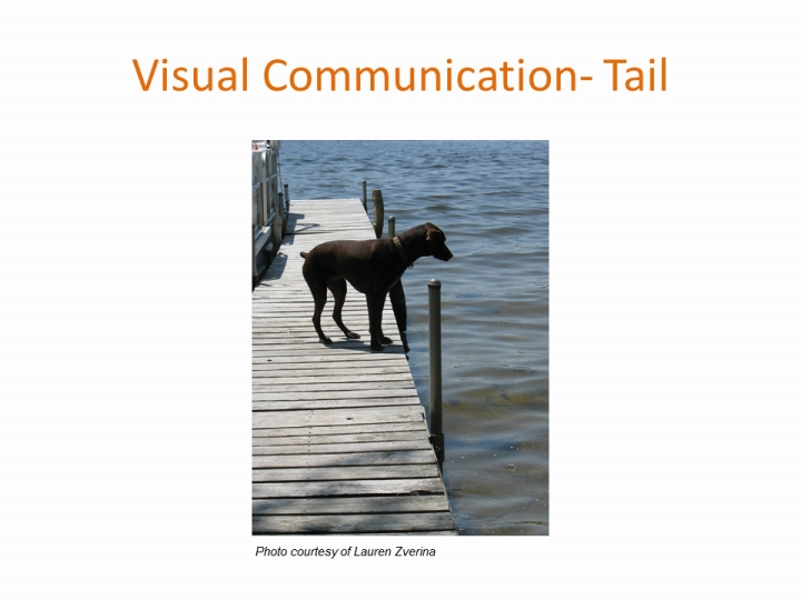what is visual communication in animals