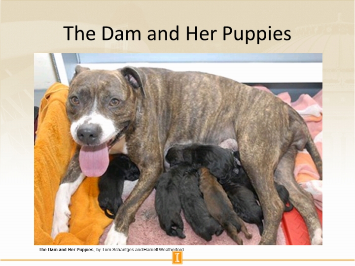 The Dam And Her Puppies