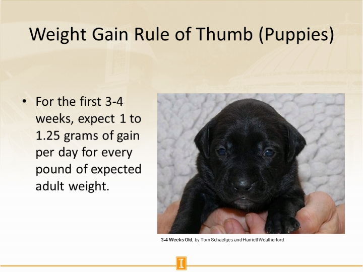 Weight Gain Rule Of Thumb Puppies