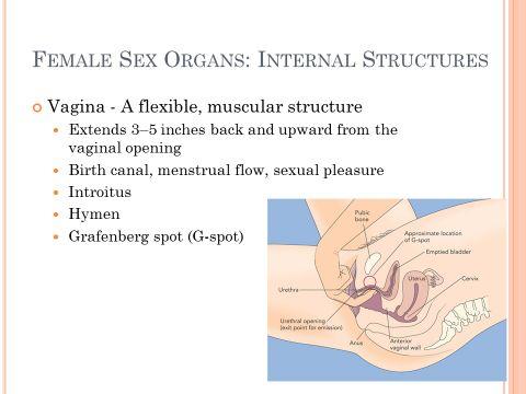 Stimulate female sexually