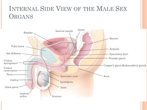 homologous-organ-to-vagina-in-males-reviews-on-adult-friend-finder
