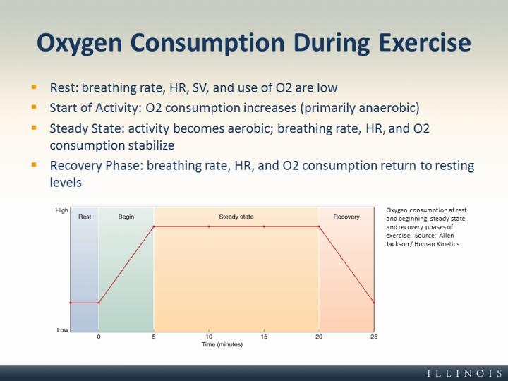 ventilation and oxygen consumption essay